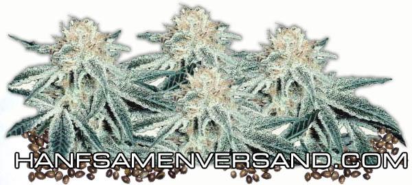 strafe marihuana besitz